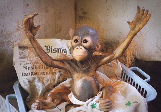 realistic sculpture orangutan Annerose